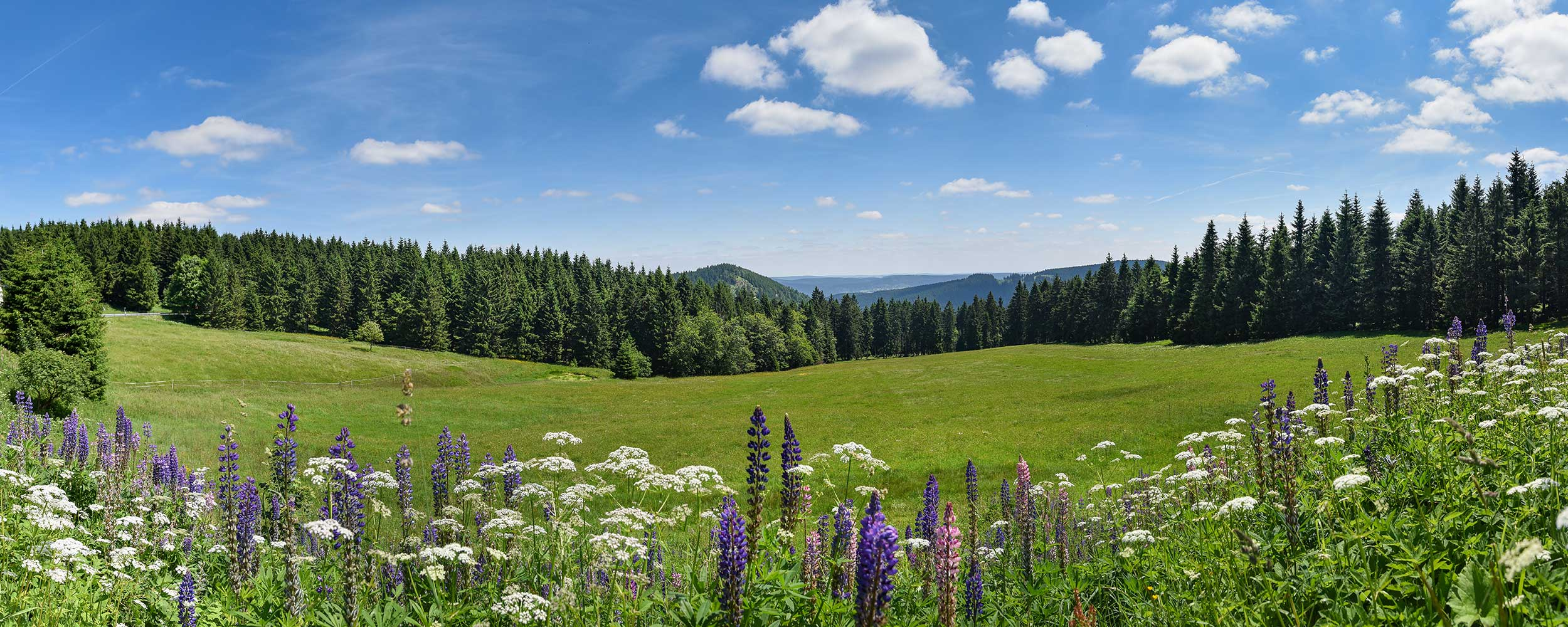 Bergwiese Thüringer Wald im Sommer